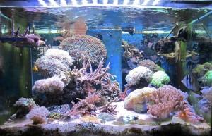 Foto di un Acquario marino (con acqua di mare)