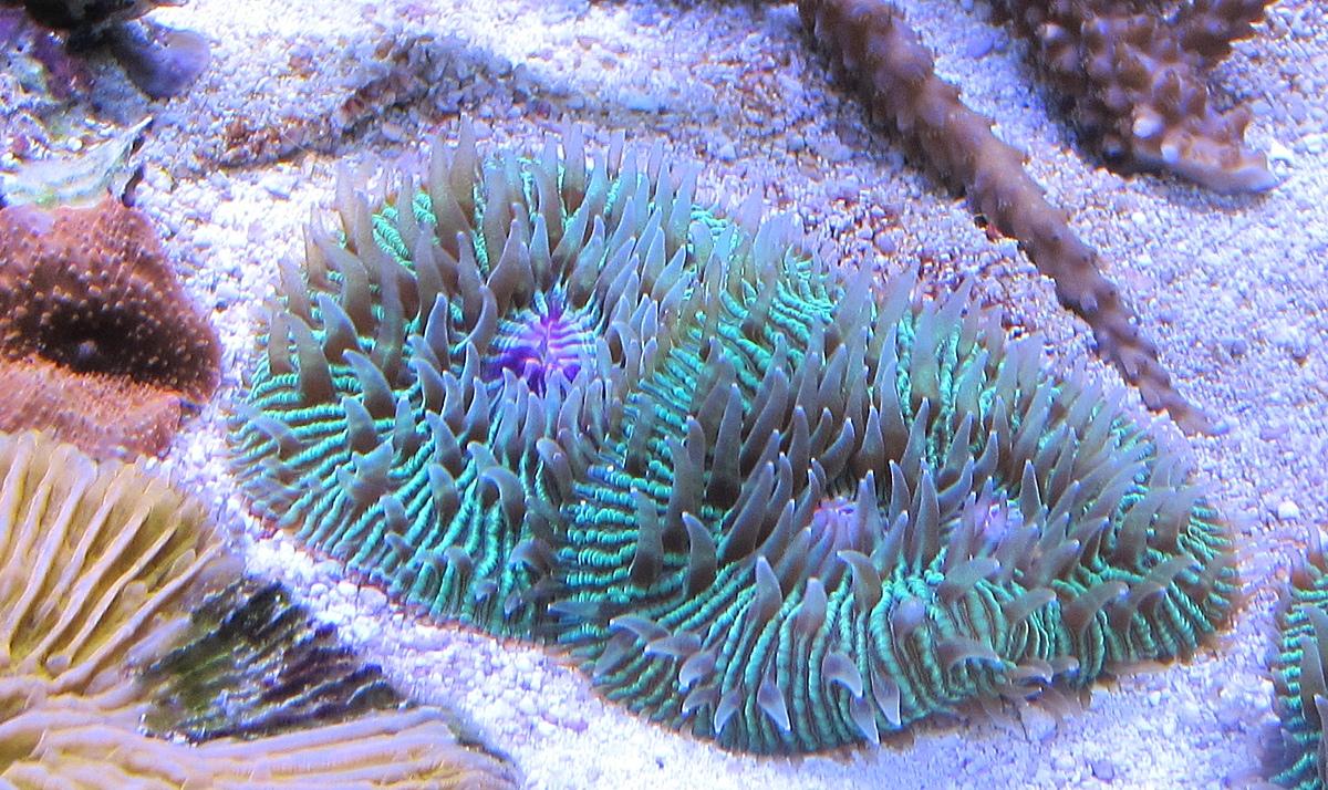 Foto dell acquario marino dopo l estate for Acquario marino in vendita