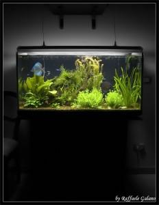 Acquario dolce con Discus e piante
