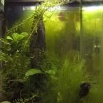 Foto laterale dell'acquario LAC sinistro, in bagno