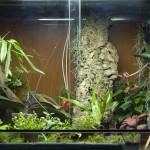 terrario / orchidario, aggiornato ad aprile 2009