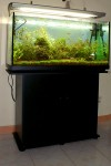 L'acquario dopo l'estate 2009