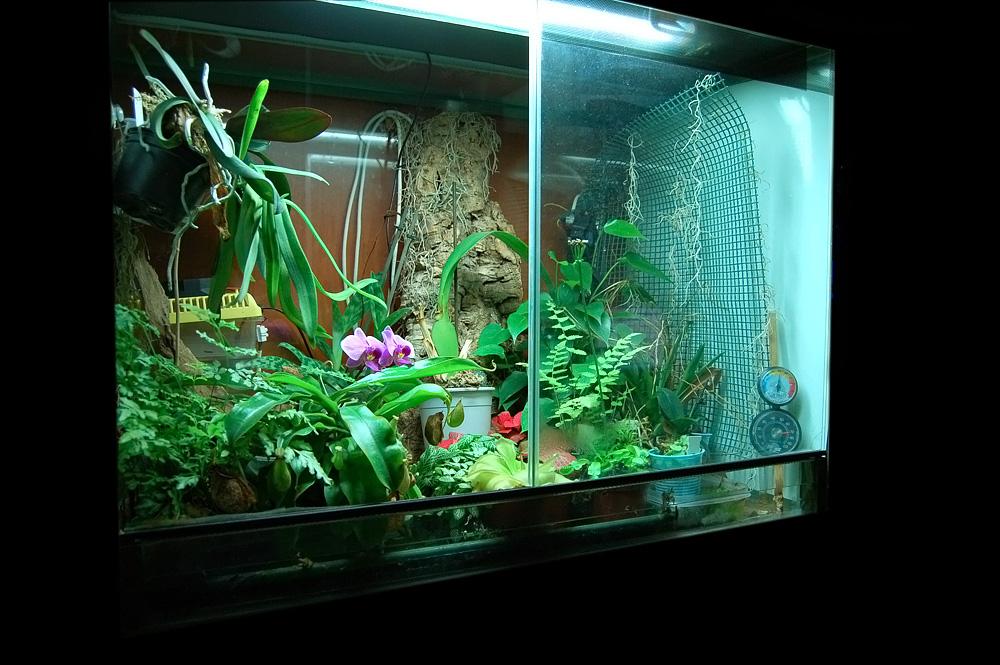 Serra calda 80x50x60 con orchidee piante carnivore e for Orchidee in casa