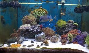 foto di coralli e pesci tropicali in casa