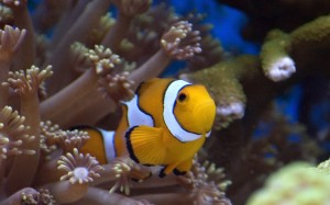 nemo? No... un fratellino!