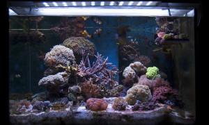 acquario acqua salata (ottobre 2013)