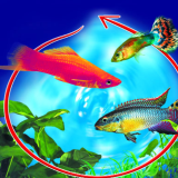 Mini Guide all'acquario in PDF (ebook)