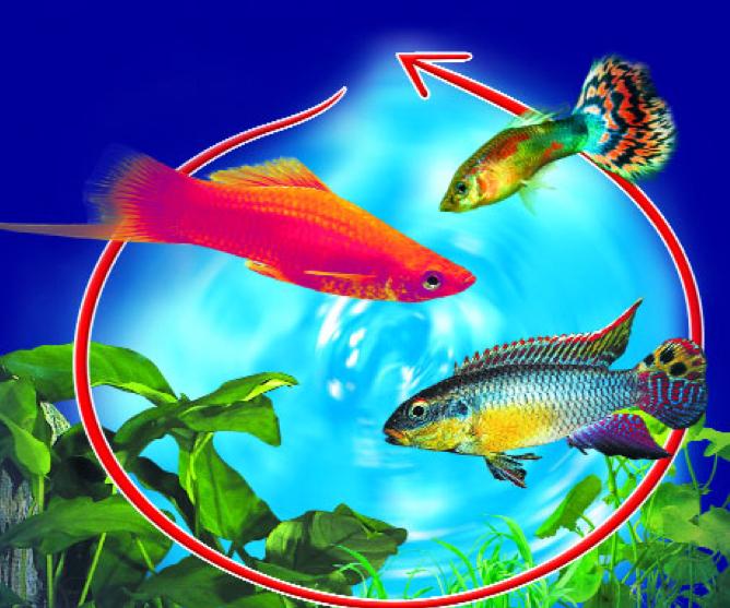 Mini guide all acquario in pdf ebook acquariando for Acquario per tartarughe piccole