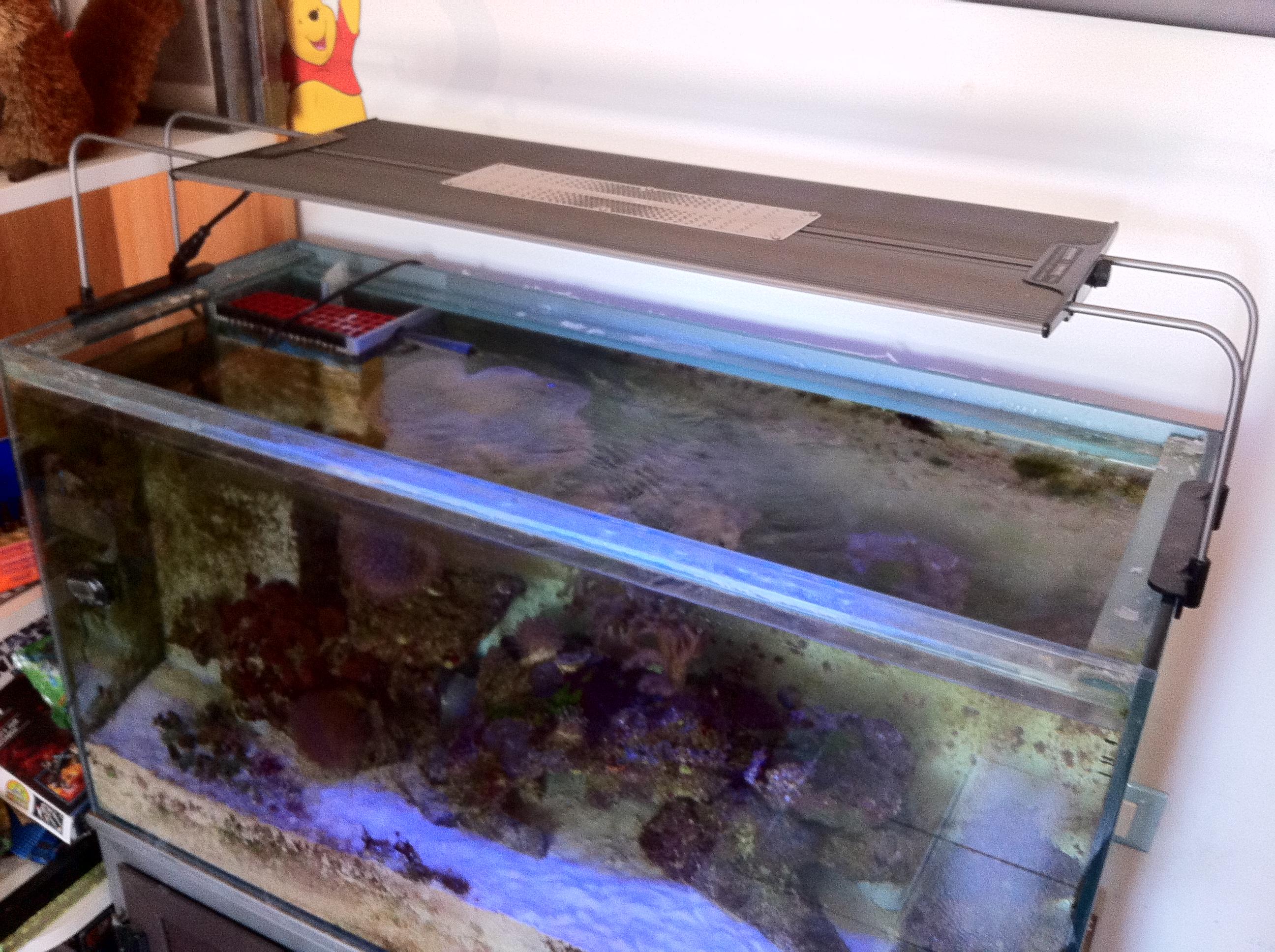 Plafoniera Led Per Acquario Acqua Dolce : Acquario marino litri acquariando consigli per acquari con