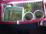 Le 3 micro-vaschette dedicate ai killi appena schiusi