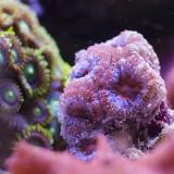 2 piccoli video timelapse con l'alimentazione di coralli