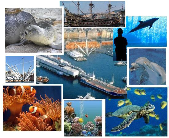 L'acquario di Genova, com'è e come sarà