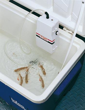 Temperatura acqua acquario pesci rossi for Ossigenatore acquario pesci rossi