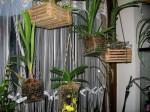 cestelli con Orchidee appesi in casa