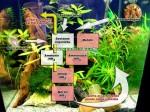 ciclo dell'azoto, batteri in acquario
