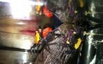 """coppia di granchi geosesarmacoppia di granchi geosesarma, il viola è chiamato anche """"vampire"""" perchè in effetti molto scuro, con zone viola... fa un po' paura"""