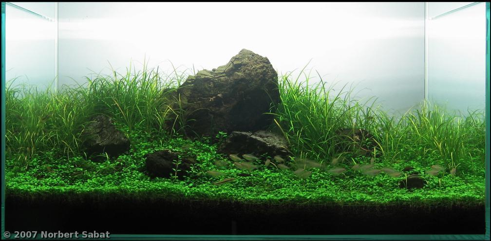 Acquario in stile IWAGUMI, trovato fra i migliori piazzamenti dell'AGA contest 2007