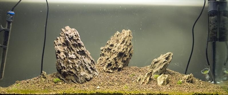 Iwagumi - Acquario ZEN - ZEN Aquarium