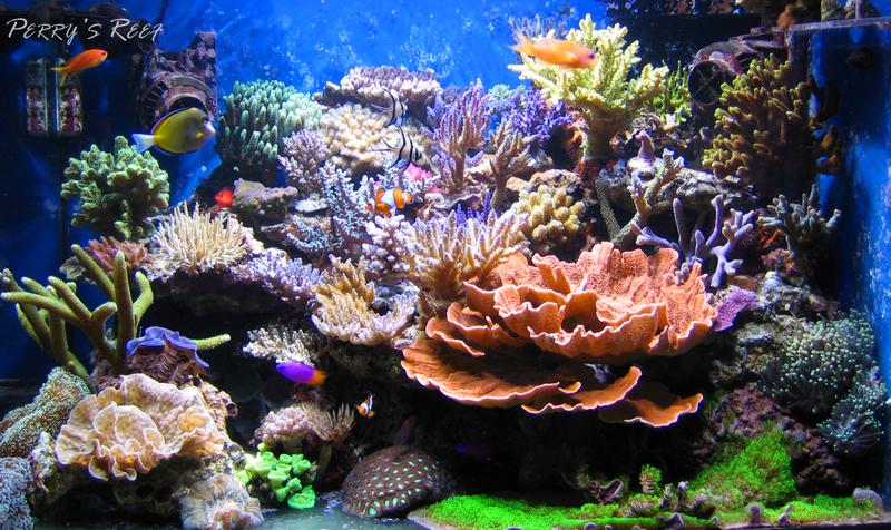Acquario tropicale marino di barriera