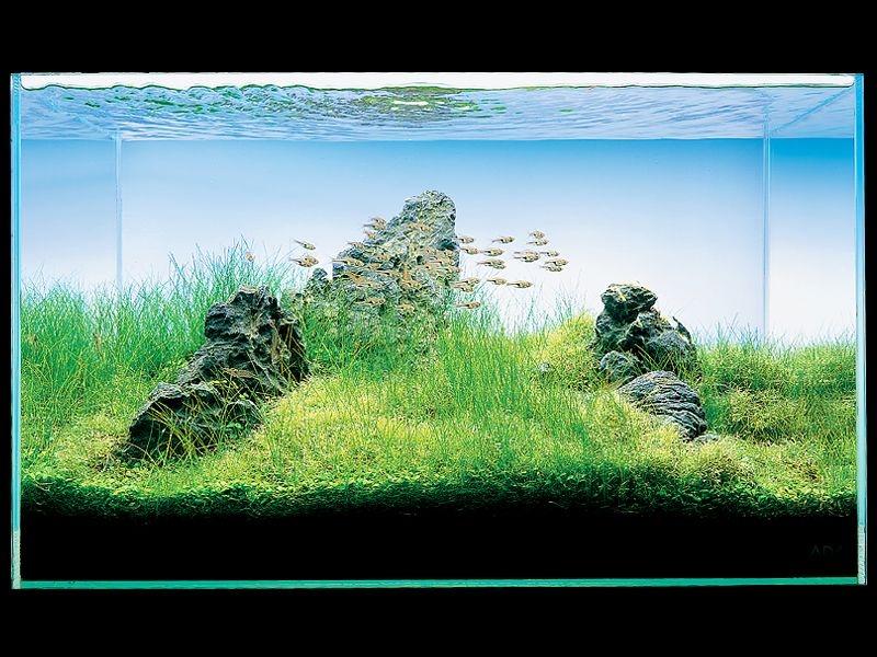 Un acquario in stile IWAGUMI, del grande maestro Takashi Amano!