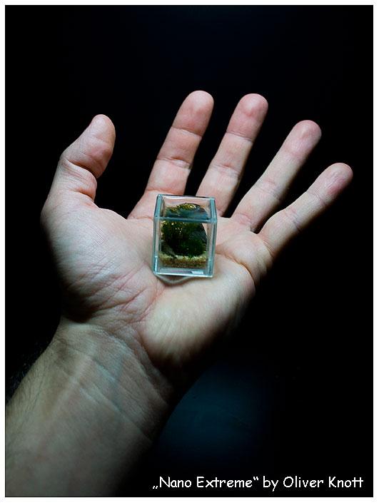 Micro acquario che stà in un palmo di mano: 3 cm di lato