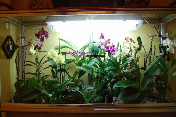 Orchidee in casa quali altre specie da serra calda - Acquario in casa ...