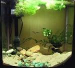 Insieme dell'acquario che ospita la comunità di N. multifasciatus