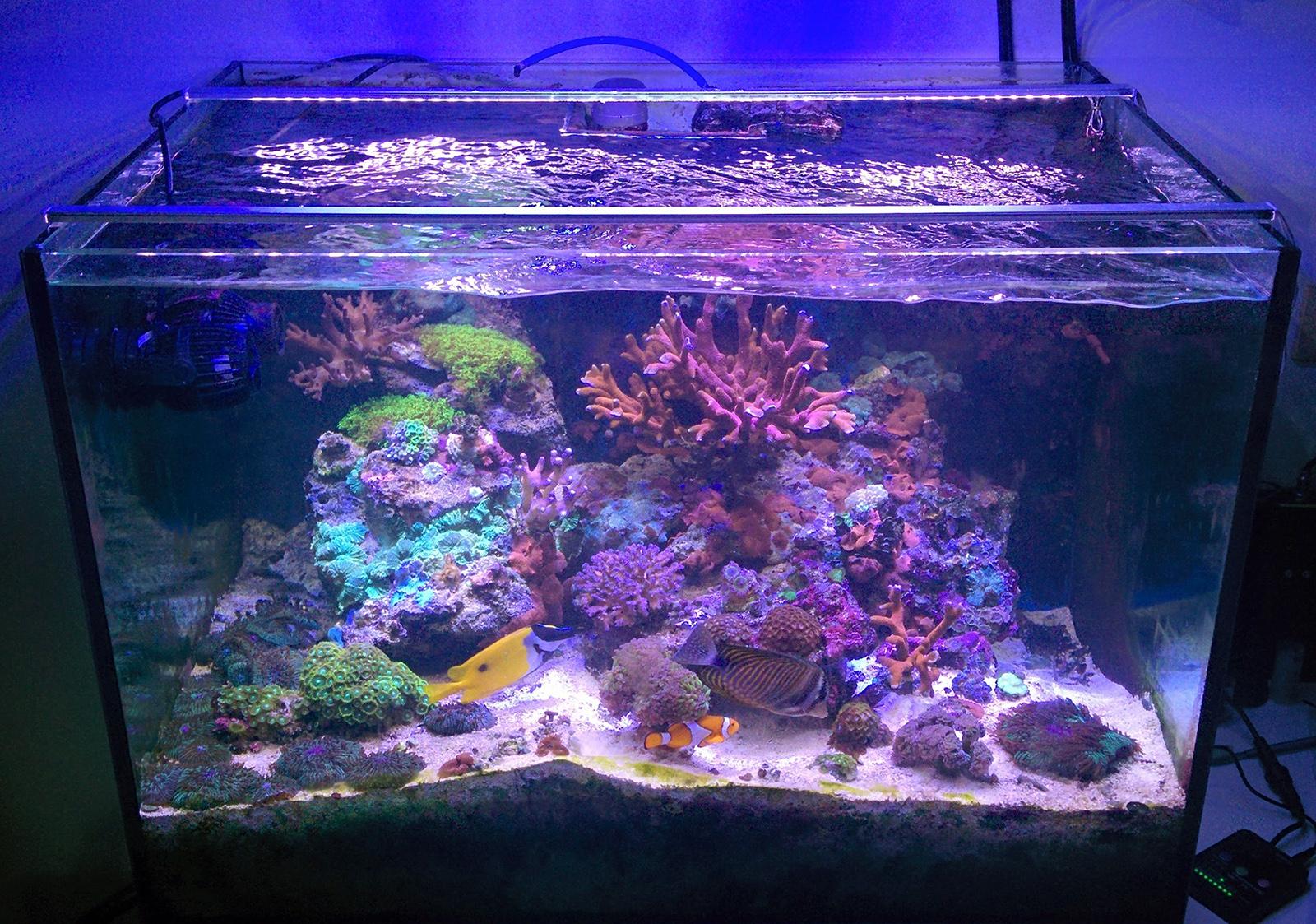 Piante Per Acquario Marino : Acquario marino tropicale 'easy lps