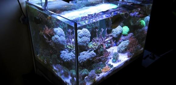 Acquario marino tropicale 80x55x55 'Easy LPS'