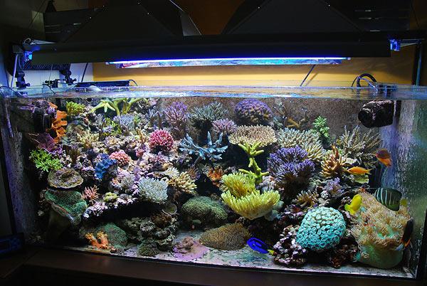 Acquario marino 200 litri casamia idea di immagine for Acquario aperto prezzi