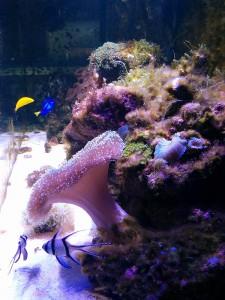 acquario marino di Lorenzo, a giugno 2015