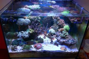 acquario marino 2013, con pesci, coralli e invertebrati