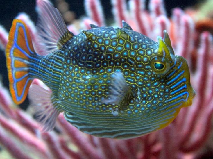 I Coralli Sono Animali Home » Uncategori...
