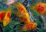 pesci con tatuaggio