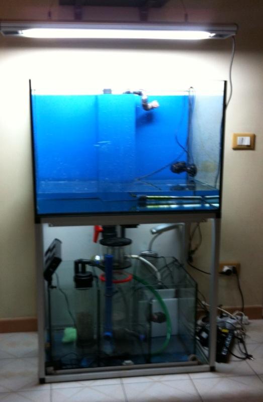 Acquario marino tropicale 80x55x55 easy lps for Pesci con la e