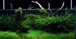 rimless, l'acquario di Orlando dagli USA