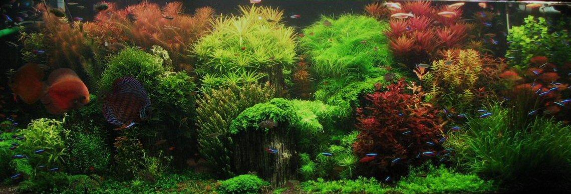 le piante per acquario a crescita rapida facili per tutti - Allestimento Acquario Dolce Con Piante Vere