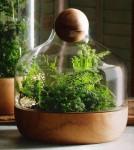 Legno e Vetro, un bel vaso con comunissime felci