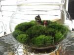 terrario con funghetto, semplice, con tanto soffice muschio