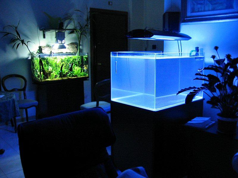 Allestimento di acquario marino tropicale cosa serve for Acquario casa prezzi