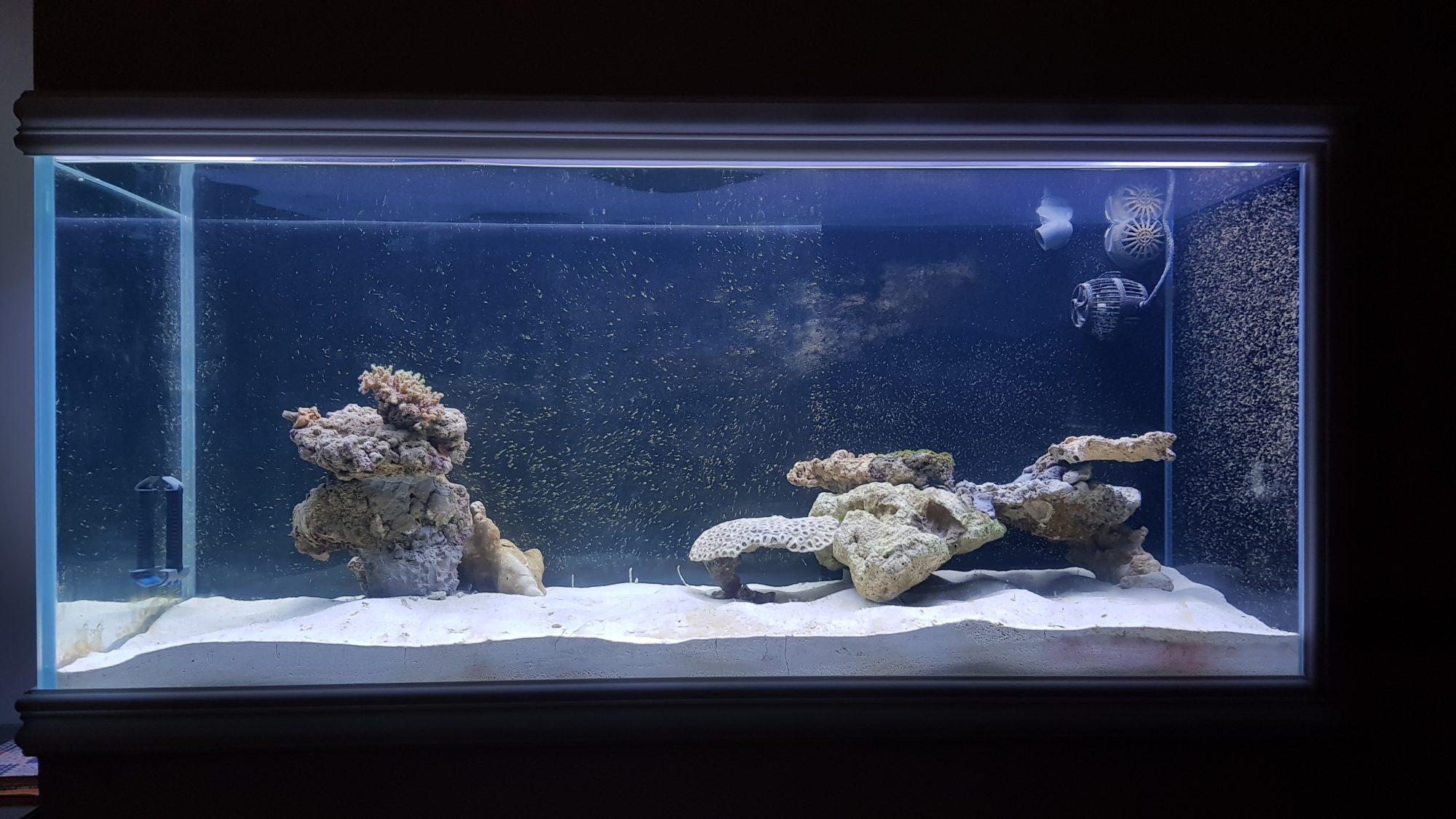 Rocciata acquario marino 1