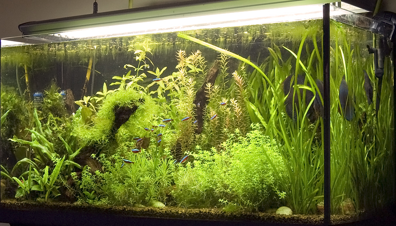 Un acquario completo: cosa serve?