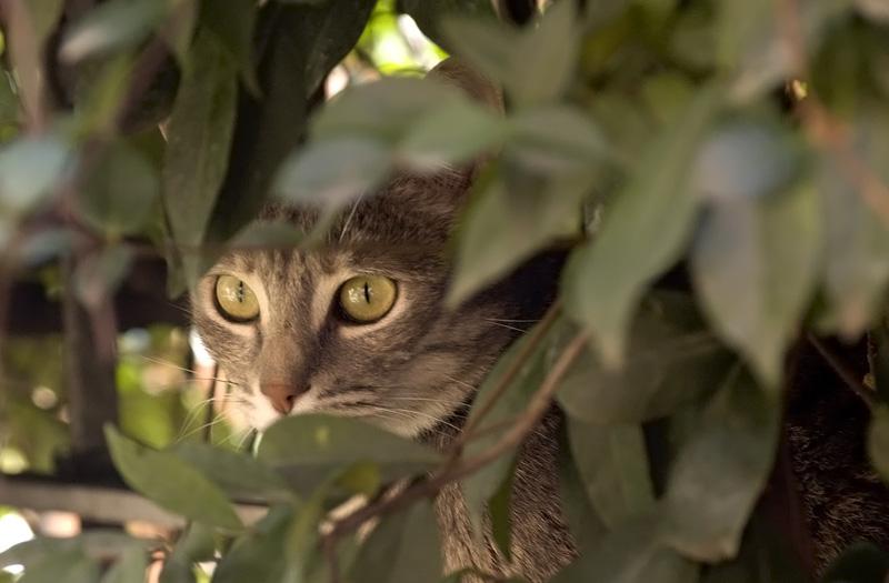 Cosa mangiano i gatti anche i gamberetti surgelati ma for Cosa mangia il gatto