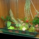 Orchidario e Terrario, ma senza rettili