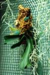Orchidea su zattera: phalenopsis mini