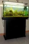 Acquario tropicale d'acqua dolce 100x40x56, la scheda