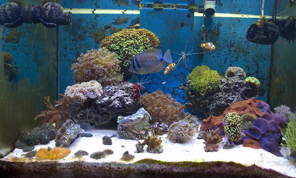 Acquario marino tropicale 80x55x55 easy lps for Pesci acquario