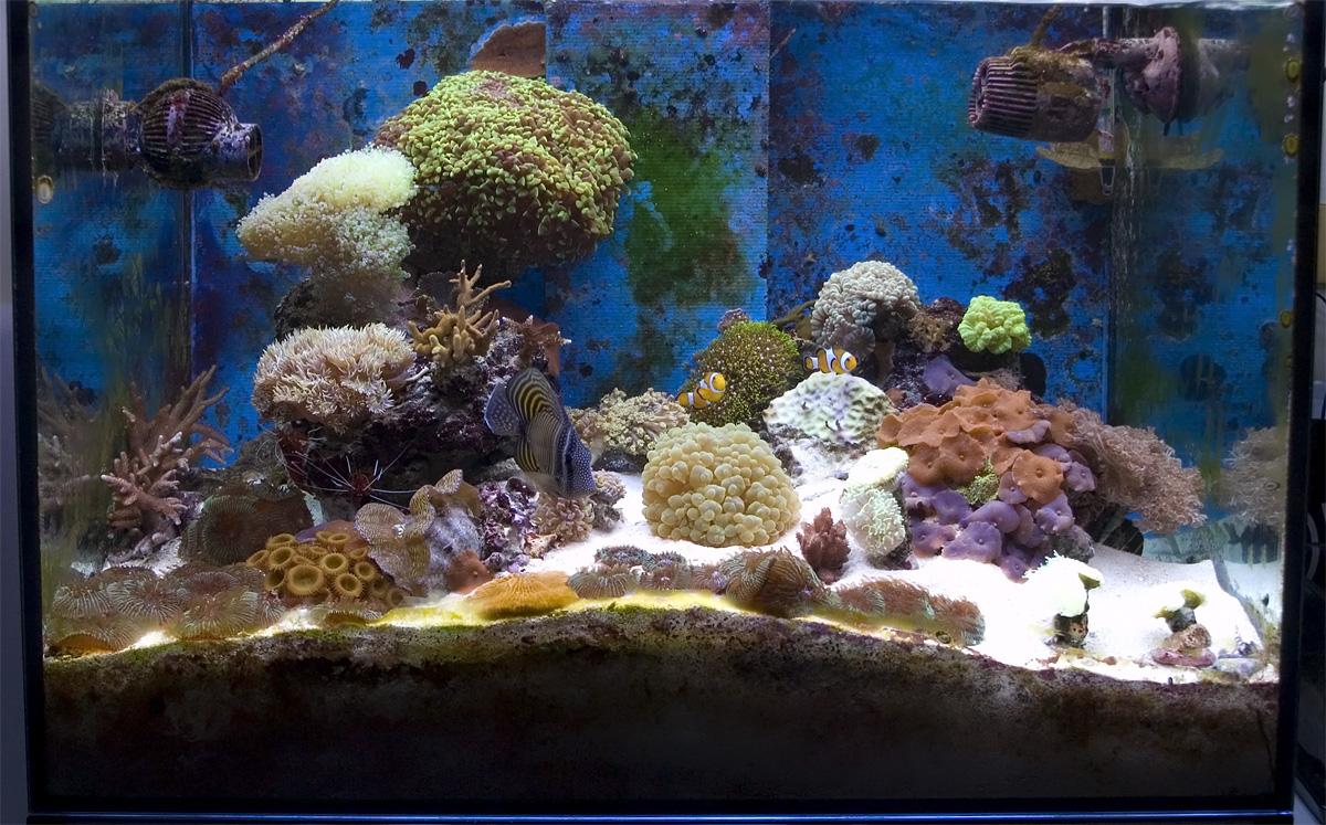 Foto dell'acquario marino, dopo l'estate