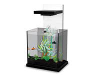 2 nuovi piccoli acquari di design minicub e aquacubic for Acquari nuovi in offerta