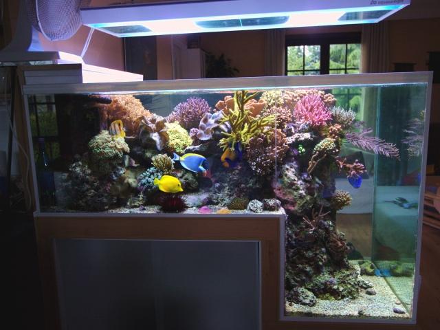 L acquario marino a sbalzo mi mancava for Acquario marino in vendita